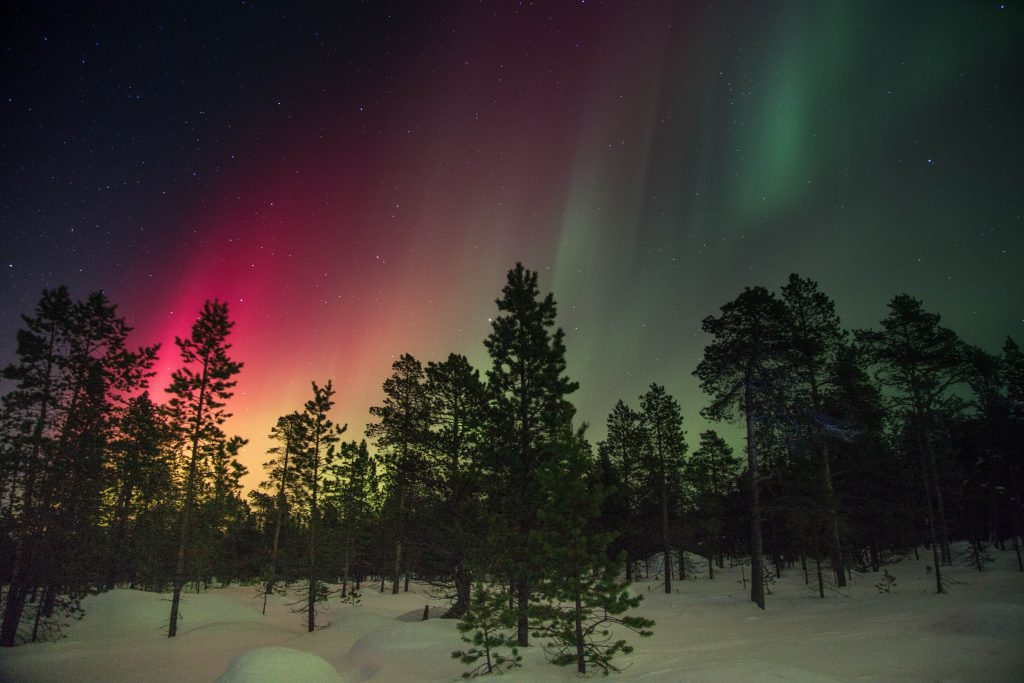 Aurora over trees in winter